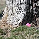 14. Мы-то думали, яйца надо будет реально искать, волновались, сможет ли Бориска их найти
