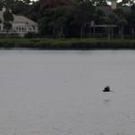 А над водой курсировали охотники за рыбой