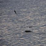 Рыбы постоянно выпрыгивали из воды