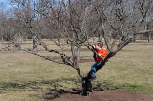 Бориска полюбил лазить по деревьям, правда пока что только исключительно по удобным деревьям. :)