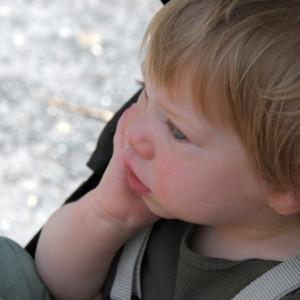 Максик недавно проснулся; смотрит на фламинго.