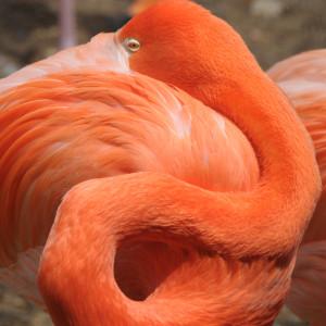 Фламинго и правда хороши!