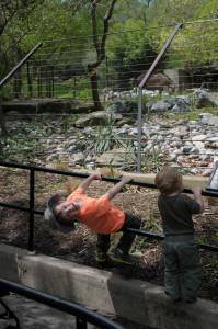 Наш зоопарк посещает вашингтонский зоопарк